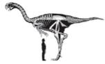 Terminated Dinosaur Era