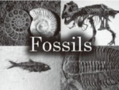 Fossil files The Paleobiology Database