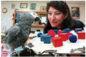 Animal minds: Parrot Alex