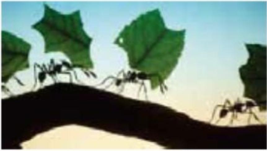 Leaf-Cutting Ants and Fungus