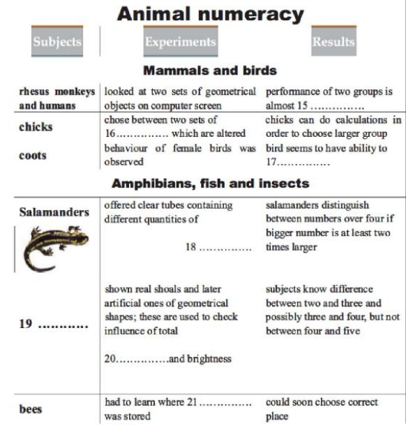Numeracy: can animals tell numbers?