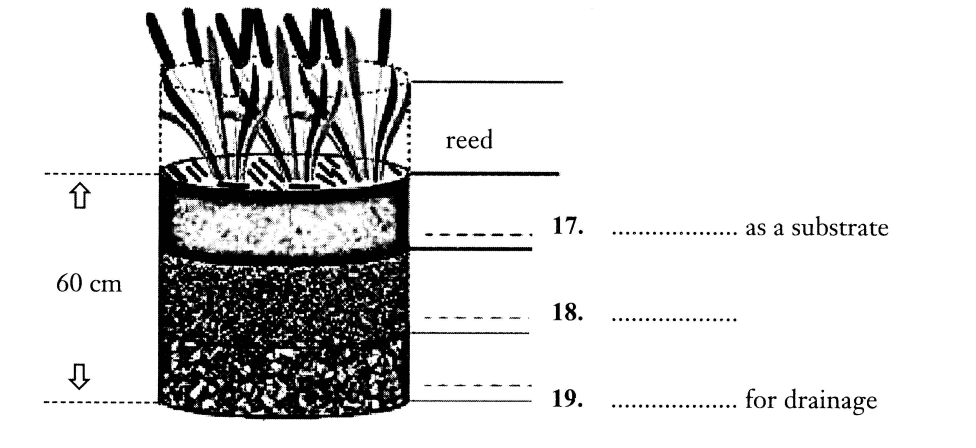WATER TREATMENT 2 : REED BEB